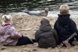 Zeehond in uitwatering Katwijk